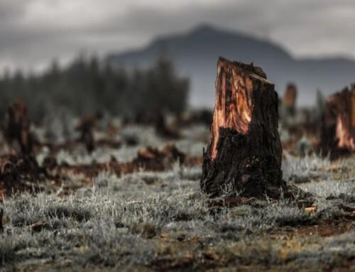 KRG kritiserer Tyrkiet for skovrydning